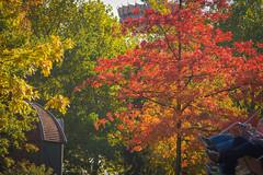 Happy autumn bench (hans_polet) Tags: hbm benchmonday wow
