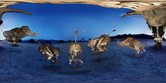 Stampede! (Bob Dass) Tags: equirectangular lordsnort bryantedrick geyserville nikond810 panosaurus20 ptgui exsucitaretriectus orionfredricks lightpainting weirdness sigma15mmf28fisheye