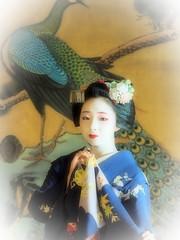 Maiko20161016_11_04 (kyoto flower) Tags: eiunin temple toshimomo kyoto maiko 20161016     yoshiyukikomori
