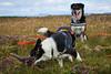 28august_Hringur&Venus_lastPlay_202 (Stefán H. Kristinsson) Tags: hringur venus august 2016 play leikur last reykjanes patterson iceland ísland