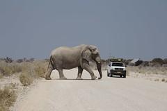 Namibia street photography (maekke) Tags: africa namibia etosha elephant animal car canon eos6d 2016 travelling