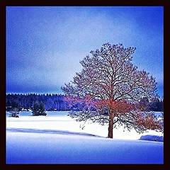 tree #trd #lonely #ensamt #fristende #snow... (Archos72) Tags: winter light shadow sun sunlight snow tree sol countryside vinter sweden frist lonely tr sn landet landskap skugga ljus ensamt solljus igsweden uploaded:by=flickstagram instagram:photo=398934327882419948271432306