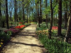 Springfields Path (saxonfenken) Tags: flowers trees garden spring path thumbsup spalding springfields 7068 friendlychallenge herowinner pregamesweepwinner e301stmayspringfields 7068trees