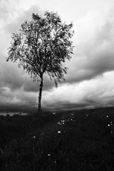(seeingthrough) Tags: white storm black nature germany dark landscape bayern deutschland bavaria photography fotografie dunkel sturm unwetter