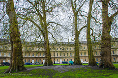 Circus Trees - Bath, Avon, England, UK (Paul Diming) Tags: uk greatbritain england landscape spring bath unitedkingdom circus avon bathengland thecircus d7000 avonengland circusbathengland pauldiming