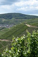 ckuchem-1442 (christine_kuchem) Tags: ahrtal anbau anbaugebiet eifel felsen rotweinwanderweg schiefer schieferfelsen sommer weinanbau weinberg weintraubenanbau weintrauben