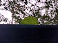 Shy (lunat1k) Tags: shy gentle leaf busstop vitosha bulgaria bokeh aftertherain totoro green nature nexus5x