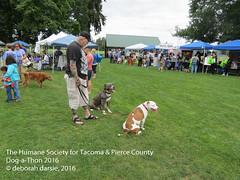 DAT2016_Crowd_1187 (greytoes_99) Tags: agility cat dat2015 dat2016 event humanesocietytacoma people summer tacoma tacomahs volunteers dog humananimalbond lakewood wa us