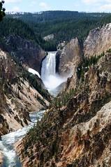 Canyon of Yellowstone (YuriZhuck) Tags: us usa wy wayoming nature landscape canyon rock mountain river yellowstone park