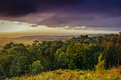 Guardians of greenery. (kritikapoor2011) Tags: hiking southaustralia dusk cloudysky d5300 colourful landscape mighty mtlofty adelaide australia nature greenery mountains