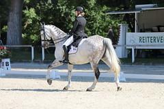 IMG_7362 (dreiwn) Tags: dressage dressur dressuur pferd reitturnier turnierreiten pferdesport horse horseback horseriding equestrian reitverein dressurprfung kandare doublebridle reiten pferde reitplatz ridingarena