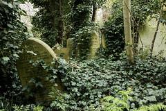 (Josieroo13) Tags: secrettaphophile gravestone graveyard gravemarker grave graves death lifeanddeath beautyindecay ivy naturealwayswins serene calm peaceful cemetery abneyparkcemetery magnificent7 londoncemeteries londonsdead london victorian victorianburial burial burials