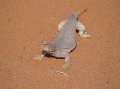 #مساء_الخير #ضب#لحظة #غضب #المقطع #جحرة #مغلق#الضب #سحلية #سحالي #زواحف#مكشات #كشته#sonyalpha#القصيم #السعودية #تصويري #مقطع #video#دينصور #دينصورات#Lizard #lizards #reptiles #dinosaur #dinosaurs#animal #animals#حيوانات #حيوان (photography AbdullahAlSaeed) Tags: مكشات كشته dinosaurs video مقطع مساءالخير reptiles سحالي animal ضب lizard lizards حيوانات دينصورات سحلية dinosaur السعودية زواحف المقطع دينصور تصويري جحرة القصيم الضب لحظة sonyalpha animals مغلق غضب حيوان