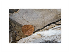 A Fallen Leaf Hits Rock Bottom. (Mikec77) Tags: autumn rocks sedimentaryrocks autumnleaves