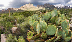 When the Desert is Green (BongoInc) Tags: newmexico chihuahuandesert cactus organmountains nationalmonument desertsouthwest