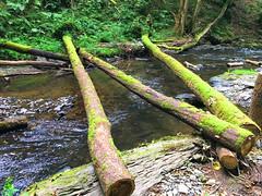 Bume liegen ber einem Fluss (10.000 Schritte) Tags: fluss wald weg bume baum natur wasser see teich steine fels katzenelnbogen jammertal baumstamm pflanzen wandern