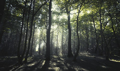 no need for a dark place (-SebsTian-) Tags: sun trees green light woods sony a58 sigma 1020