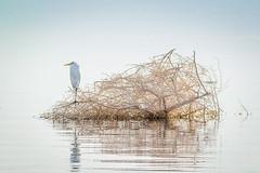 Egret at Salton Sea, California (Anne McKinnell) Tags: egret saltonsea california bird animal wildlife