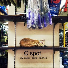 Who needs any spot when you can always nail the #Cspot at our neighbourhood hardware store? #cat #napping (sang.dewa) Tags: hardwarestore napping cat instagramapp square squareformat iphoneography