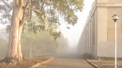 Foggy morning (NettyA) Tags: 2016 australia brisbane chapelhill greenshillreservoir qld queensland sonya7r atmospheric fog mist shadows tree sonyflickraward