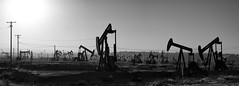 Too Many To Count (Woodlands Photog) Tags: sunrise morning oil wells bakersfield california bw monochrome