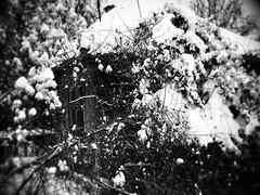 12534087_1082815228416001_603393356_n (dragica_basaric) Tags: winter snow wonderland magic magical snowy flake nature green colours streets treet postcar postcards love train phot january 03 2016 photo photography d b danchy92 dragicabasaric lapovo serbia srbija srb sumadija dbphotography
