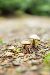 DSCF4298 (LEo Spizzirri) Tags: bevin morgan peter odin huck huckleberry shug cabin northwest seattle forest pacific mushroom moss josh betsy ladder green thick