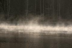 The elves was dancing on the lake (atranswe) Tags: dsc2782 sweden sverige vsternorrland ngermanland vja latn625818lone17427 grssjn lake sj nature autumn hst outdoor ute dimmsljor dimmasljor freezingfog mist haze brume lvor elves atranswe