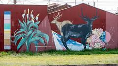 _DSC6040 (Mario C Bucci) Tags: saida fotografia pacheco paulo tellis mario bucci hugo shiraga fabio sideny roland grafites volu ii