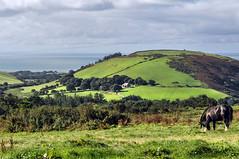 Round Wales Walk 48 - Shire on a Hill (Nikki & Tom) Tags: waleswalescoastpath roundwaleswalk uk gwynedd hills campsite fields horse shire