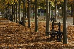 PATI102013_002R_FLK (Valentin Andres) Tags: autumn banco france francia luxemburg luxemburgo paris seat garden hojas jardin leaves otoo park parque
