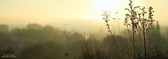 High altitude plant (piotrpicheta) Tags: cracow krakow zakrzwek wschd soca sunrise poland greenhabitat