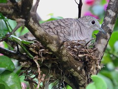 Madre protectora (kenethluna.) Tags: bird nest mother nature three bokeh canon