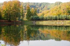 kora oktber a Bdi tnl / in early October at the Bdi lake (debreczeniemoke) Tags: erdly transilvania transylvania nagybnya baiamare fernezely tjkp landscape sz autumn erd forest t bdit lake pond szimmetria symmetry olympusem5