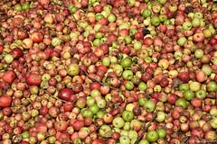Fte du cidre (celine.garrabet) Tags: fete pomme cidre tradition france dansle77 seineetmarne provins