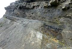 (ArgyleMJH) Tags: geology carboniferous sandstone mudstone coal novascotia