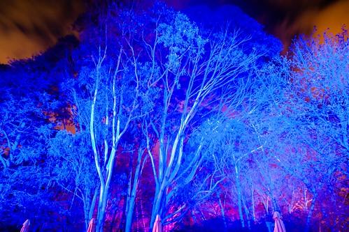 Floriade At Night-48