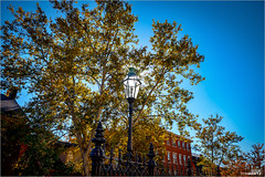 Sun Behind The Lamp Post (tombentz33) Tags: autumn trees quaint