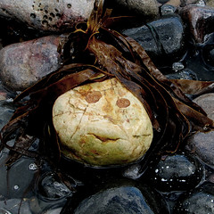 Stone (16)A (Padski1945) Tags: onthebeach astone stone pebble afaceinthecrowd likearollingstone stoneme