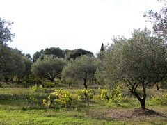 Lourmarin (TineMona) Tags: lubron provence