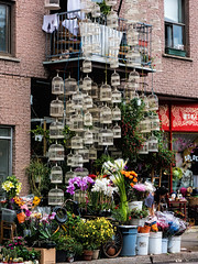 Extravaganza (Szoki Adams) Tags: montreal extravaganza colors birdcages flowers bike balcony store pitbull cacaphony brickbuilding shop character outdoors streetphotography street streetphoto colorful canong15 canon