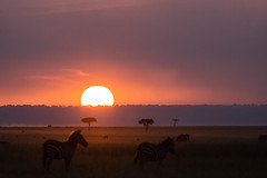 Rserve du Masai Mara Kenya_7015 (zebag2013) Tags: couchdesoleil kenya masamara