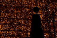 _D203982.jpg (fdc!) Tags: 78yvelines 78000versailles arbre arbres architecture charmille chateaudeversailles contrejour description eclairage espacesverts espacesvertssportsloisirs europe factueldescriptif floral flore france frmont geographique iledefrance lumire nature nocturne noir nuit obscur obscurit occident ombre parcsetjardins plante plantes prisedevue taille termessurlaphotographie topiaire urbanisme urbanismequipementszones versailles vgtal vgtalplantes vgtation zonesdeloisirs taill