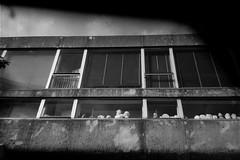 16-038_14 (gyjishukke) Tags: 6 400tx analog argentique believeinfilm buste ciment hc110b ie400iso mju2 monochrome noiretblanc platre scanlowdef selfdevelopment selfprocessing trix400 mjuii