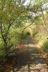 IMG_9197 (Pfluegl) Tags: wien vienna stadtwanderweg wandern wanderweg 1a sww kahlenberg leopoldsberg herbst autumn fall chpfluegl chpflgl christian pflgl pfluegl austria sterreich europa europe hikking weg pfag path track treck