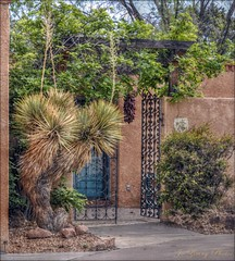The Gateway (Jo Z..Another Hot Day On The Mesa!!) Tags: door blue brown green yard court vines rocks iron pretty over sidewalk bushes hang inviting yucca stucco gage southwestern nikon1855mmlens gatewayto forourdailychallenge nikond5100