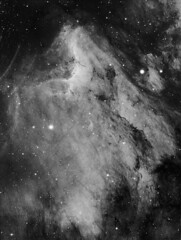 "IC5067 (""Pelican Nebula"") in Ha (Daniele Malleo) Tags: sky stars space telescope galaxy nebula astrophotography astronomy ccd qsi nebulae deepsky narrowband Astrometrydotnet:status=solved Astrometrydotnet:version=14400 Astrometrydotnet:id=alpha20130514935531"
