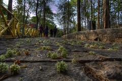 Nature Blessing (Shivany28) Tags: travel india holiday tree nature canon kerala photomatix tonemapping 60d canoneos60d shivany28