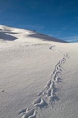 vestige (laura's POV) Tags: winter sky snow ice nature nationalpark tracks footprints jackson wyoming teton jacksonhole gtnp lauraspointofview lauraspov