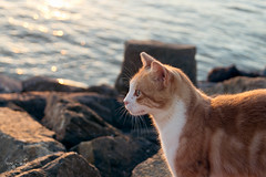 En el puerto (Jairen_) Tags: sunset cat puerto mar gato rocas